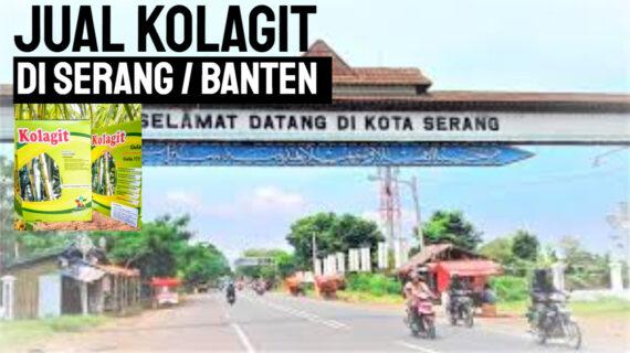 Jual Kolagit Obat Diabetes di Banten – Serang | WA 081286107878